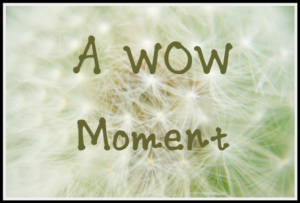 a-wow-moment-2